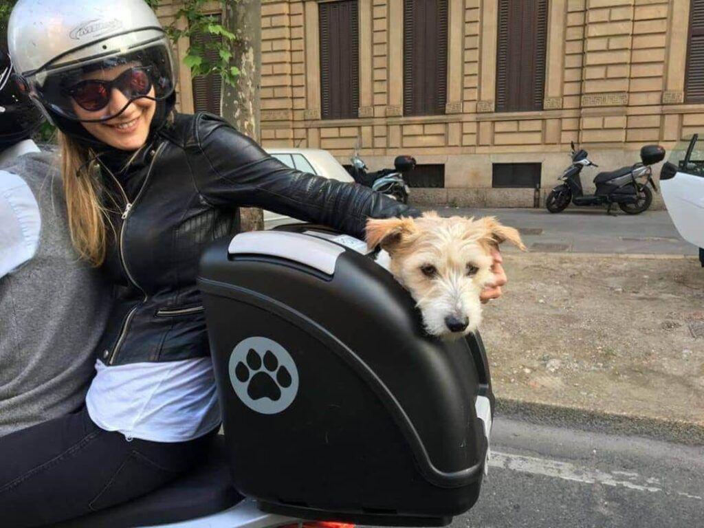 Baules para moto para llevar perro